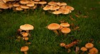 champignons, intoxications, centre antipoison