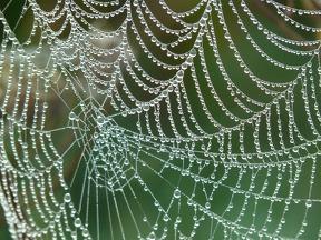 répartition, services, araignée, pharmacie, rural