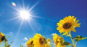 Canicule, soleil, chaleur, DGS, vigilance, Cespharm